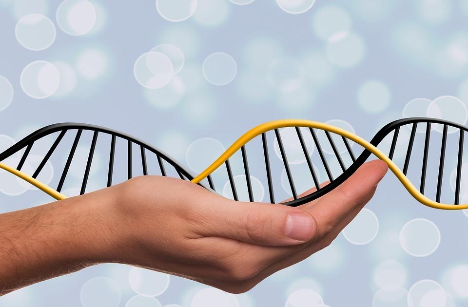 Att kontakta DNA-matchningar är nu gratis!